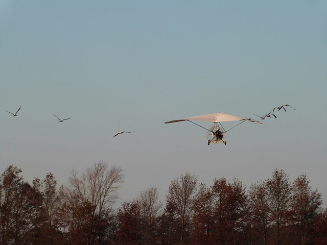 Eight young Whooping cranes with aircraft leader on their first migration