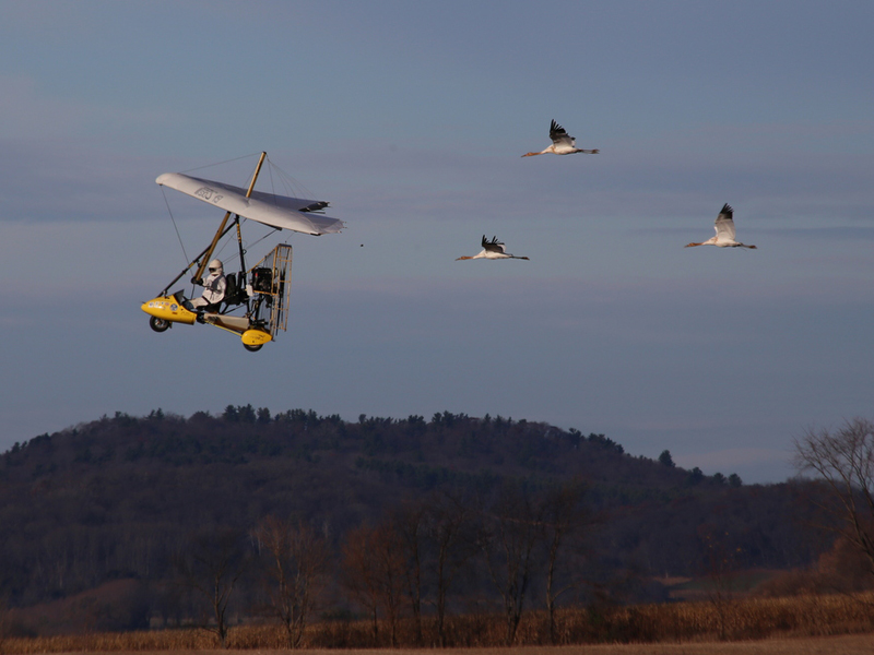 Cranes #4, 9 and 10 fly the second shift to Dane County, WI on Nov. 7.