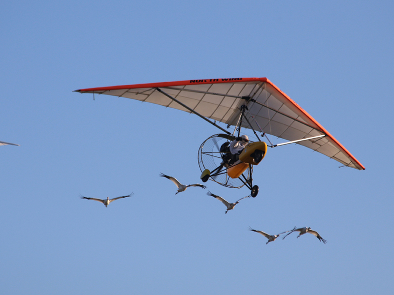 Class of 2014 cranes and the two aircraft in flight