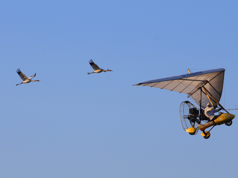 Cranes #4 and #10 flying with Brooke's plane Dec. 1, 2014.