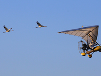 Crane #4 (lead) and #10 on their first real migration flight: Dec. 2, 2012.
