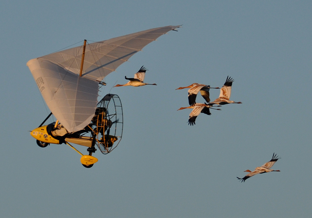 Class of 2015 fly with ultralight on migration
