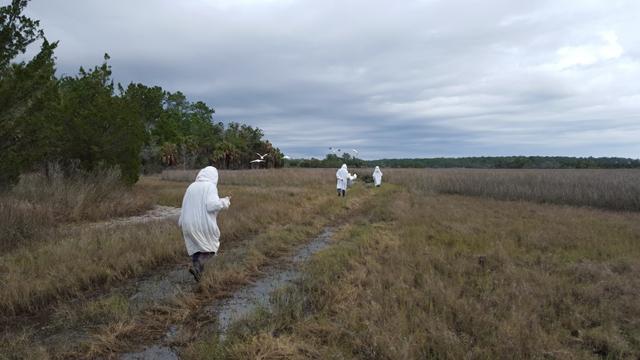 Costumed handlers escort the cranes to the release pen.