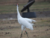 Crane 39-07 DAR on Dec. 1, 2012 in Florida