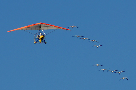 Ultralight pilot Richard van Heuvelen leads young Whooping cranes on their first migration.