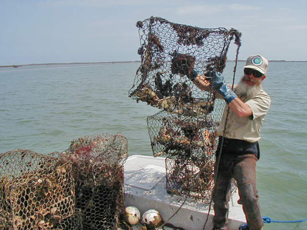 Loading abandoned crab traps in Texas.