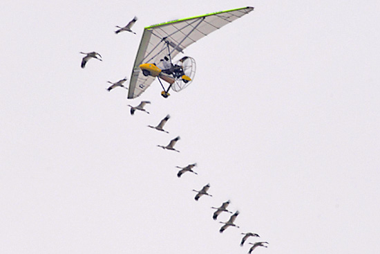 Whooping Crane Migration, Fall 2007