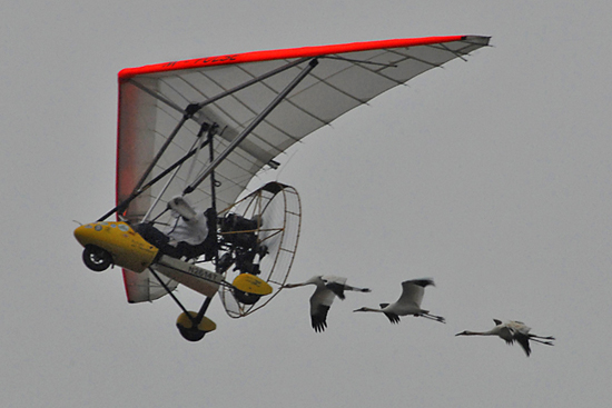 Whooping Crane Migration, Fall 2004