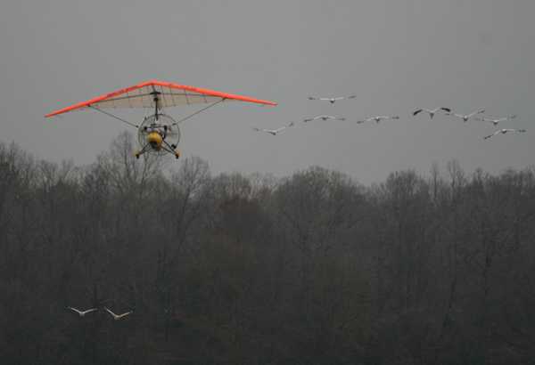 Whooping Crane Migration, Fall 2009