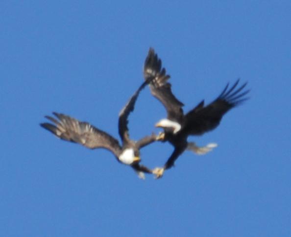 Eagle Territory