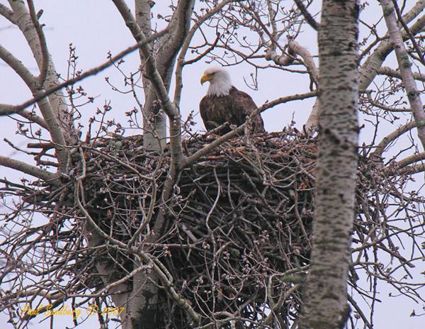 Let's Explore Eagle Nests