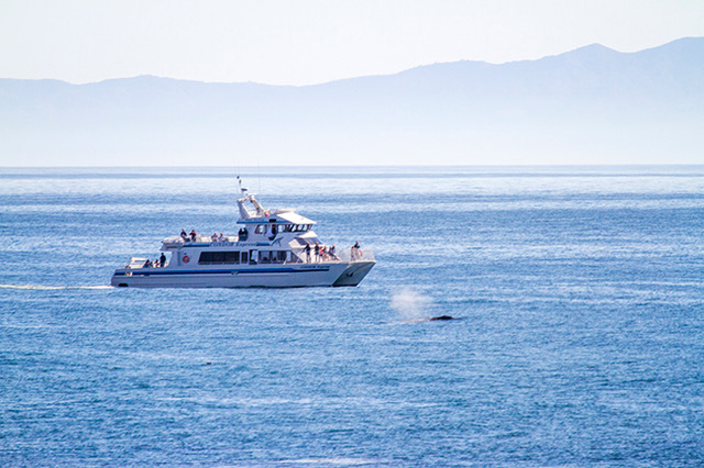 Whale watchers see migrating whales from aboard the Condor Expresss