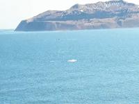Northbound gray whales passing Kodiak Island, Alaska