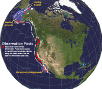 Migration Route of the Gray Whale