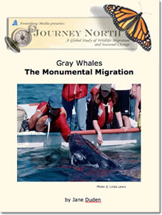 Gray Whale Migration Slideshow