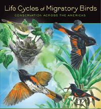 Poster for 2013 International Migratory Bird Day