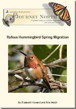 rufous migration slideshow