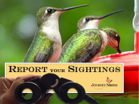 Report your sightings