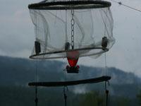 Net to capture hummingbirds for banding