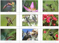 Gallery of hummingbird images