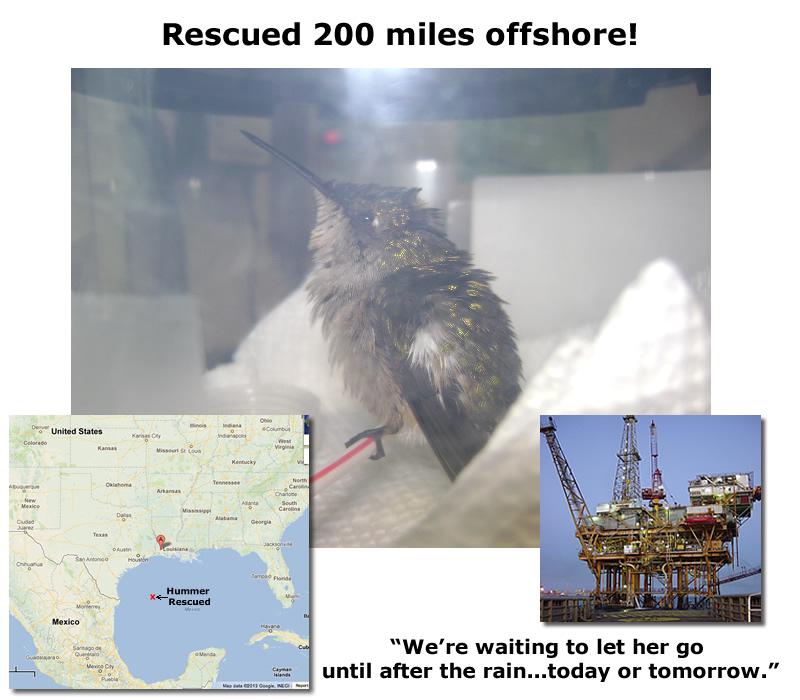 hummer rescued