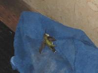 hummer found in SD