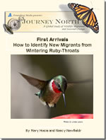 rufous migration slideshow