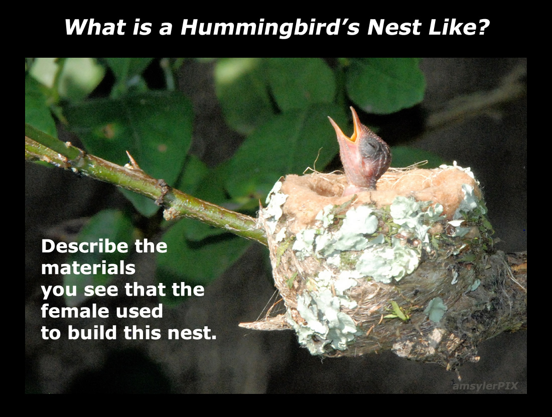 Hummingbirds: No Red Dye