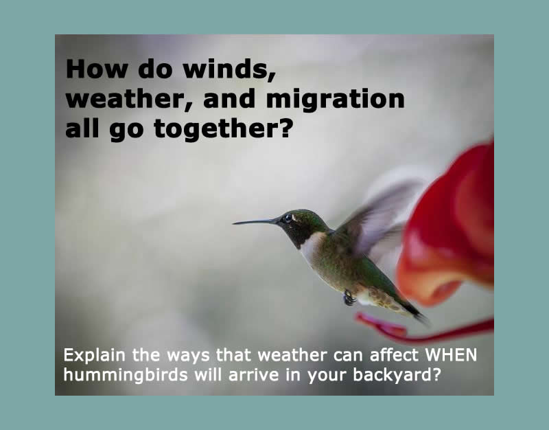 Hummingbirds: No Red Dye