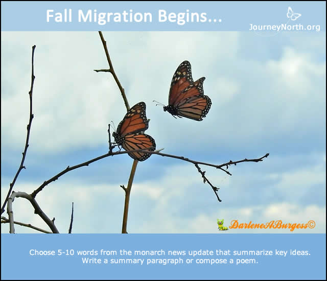 Fall Monarch Butterfly Migration Begins