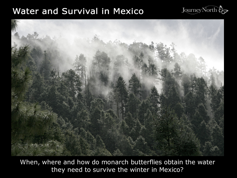 Monarchs and Moisture at Overwintering Sanctuaries in Mexico