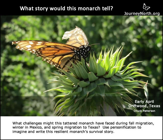Personification: What story would this monarch butterfly tell?