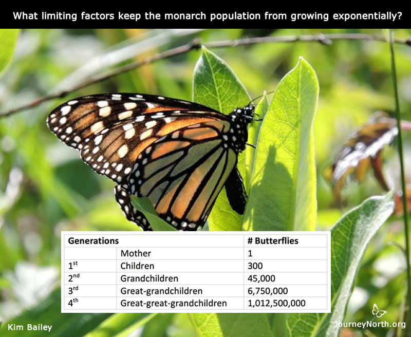 Monarch Butterfly Wings Over Time: Journal