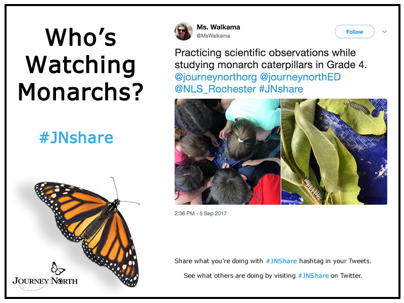 Share Your Monarch News