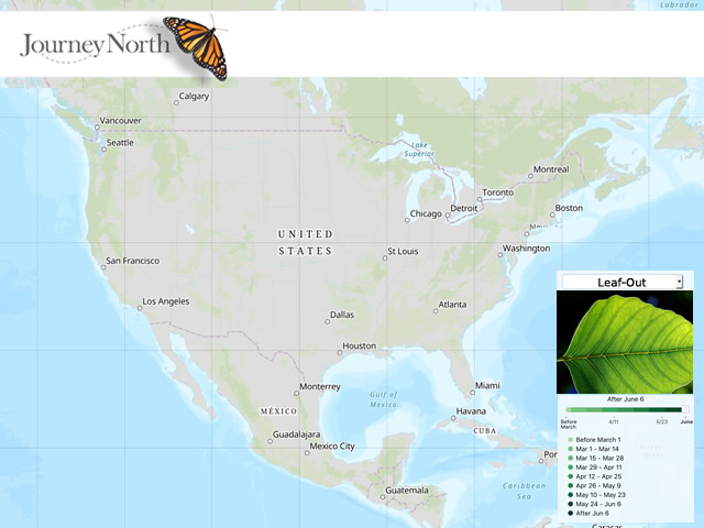 Leaf Out Map