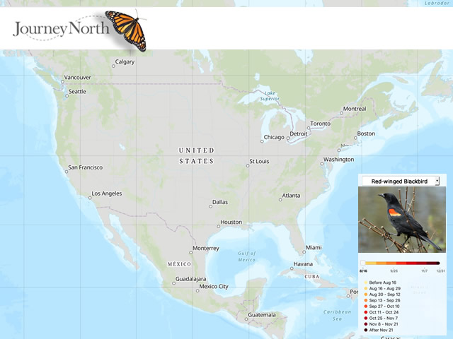 Swallow migration map