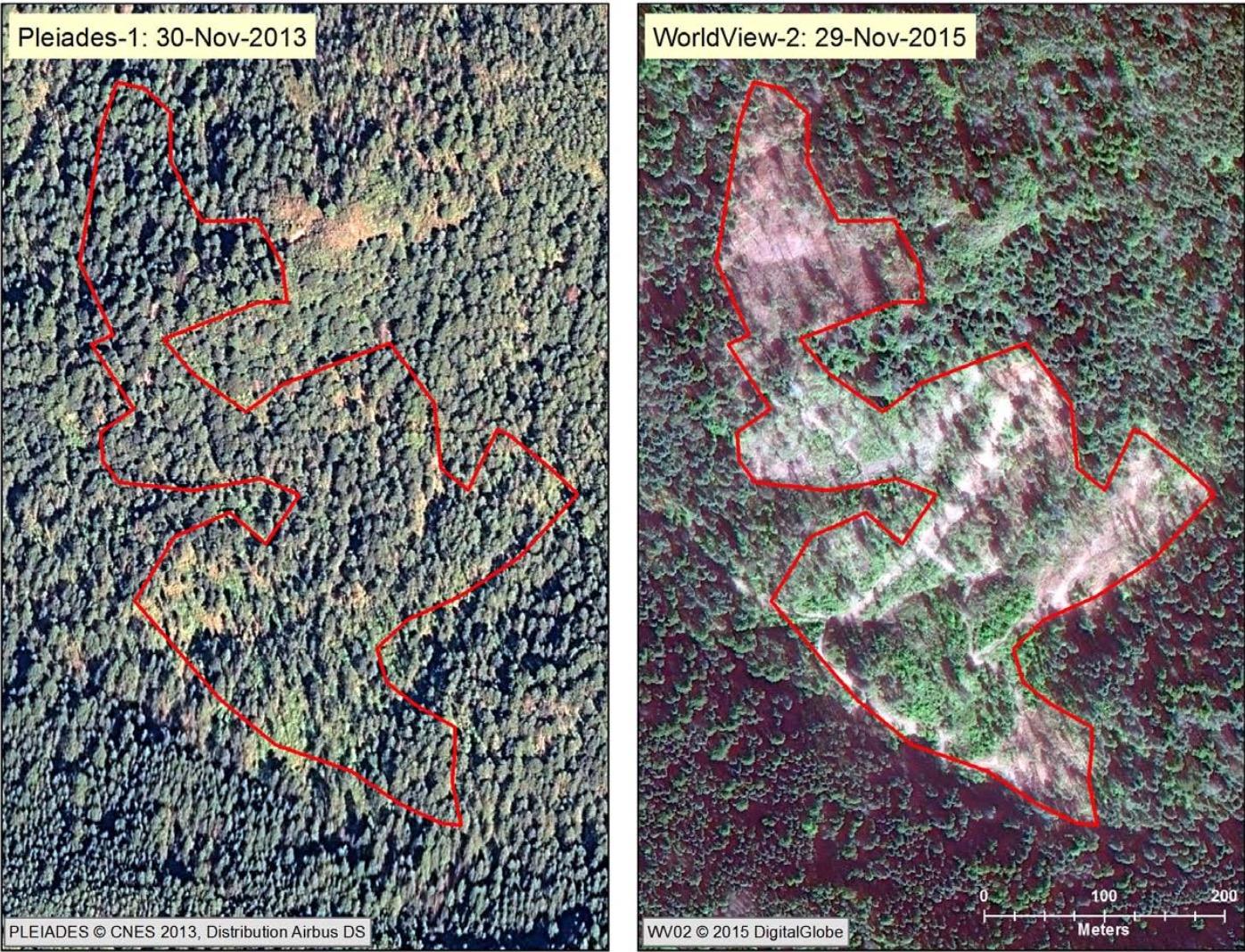 Illegal logging at Sierra Chincua Monarch Sanctuary 2015