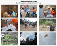 Recovering Monarch Butterfly Tags, Photo Gallery