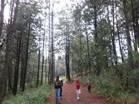 Monarch sanctuary region of Mexico