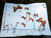 Monarch sanctuary region of Mexico