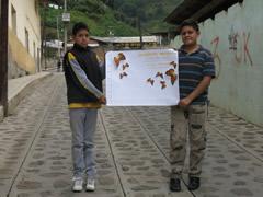 Monarch Butterfly Wintering Region in Mexico