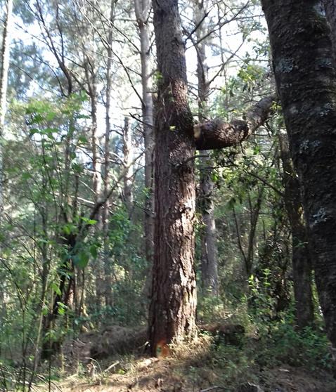 Post-Storm Salvage Logging El Rosario Sanctuary