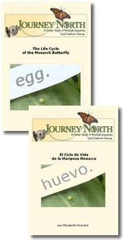 Monarch Butterfly Life Cycle | El Cyclo de Vida de la Mariposa Monarca