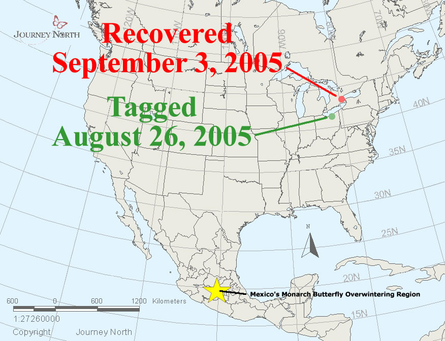 Hurricane and Monarch Migration
