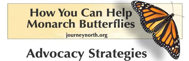 How you can help monarch butterflies.