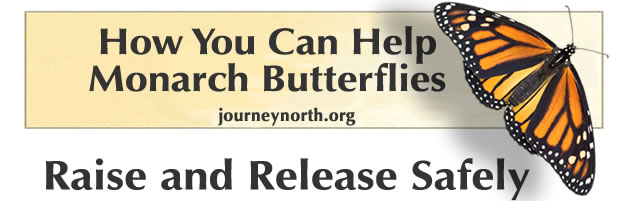 How you can help monarch butterflies.