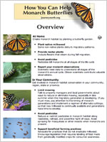 How you can help monarch butterflies