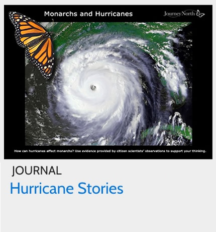 Journal: How do hurricanes affect monarchs?