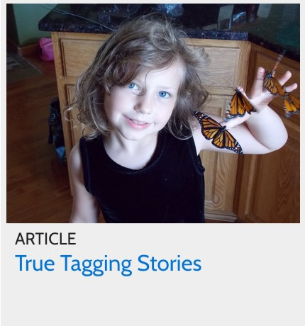 Article: True Tagging Stories