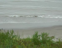 Monarchs migrating along Lake Erie shoreline